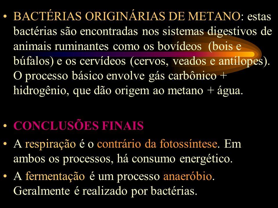 BACTÉRIAS ORIGINÁRIAS DE METANO: estas bactérias são encontradas nos sistemas digestivos de animais ruminantes como os bovídeos (bois e búfalos) e os cervídeos (cervos, veados e antílopes).