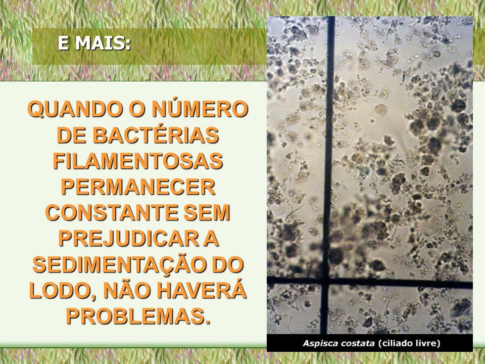 E MAIS: QUANDO O NÚMERO DE BACTÉRIAS FILAMENTOSAS PERMANECER CONSTANTE SEM PREJUDICAR A SEDIMENTAÇÃO DO LODO, NÃO HAVERÁ PROBLEMAS.