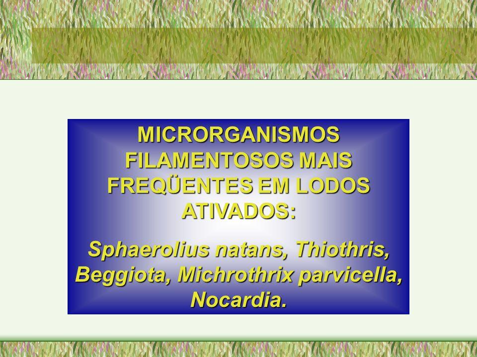 MICRORGANISMOS FILAMENTOSOS MAIS FREQÜENTES EM LODOS ATIVADOS: Sphaerolius natans, Thiothris, Beggiota, Michrothrix parvicella, Nocardia.