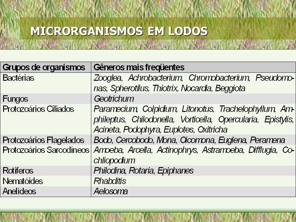MICRORGANISMOS EM LODOS