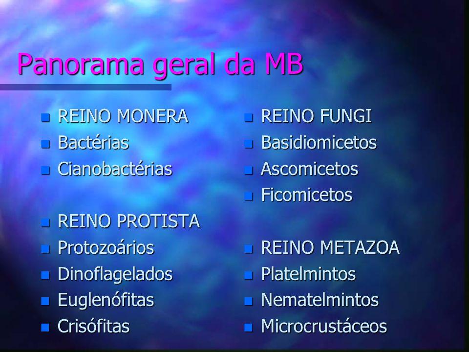 Panorama geral da MB n REINO n REINO MONERA n Bactérias n Cianobactérias n REINO n REINO PROTISTA n Protozoários n Dinoflagelados n Euglenófitas n Crisófitas n REINO FUNGI n Basidiomicetos n Ascomicetos n Ficomicetos n REINO METAZOA n Platelmintos n Nematelmintos n Microcrustáceos