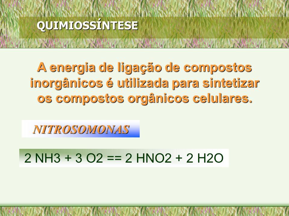 QUIMIOSSÍNTESE A energia de ligação de compostos inorgânicos é utilizada para sintetizar os compostos orgânicos celulares. NITROSOMONAS 2 NH3 + 3 O2 =