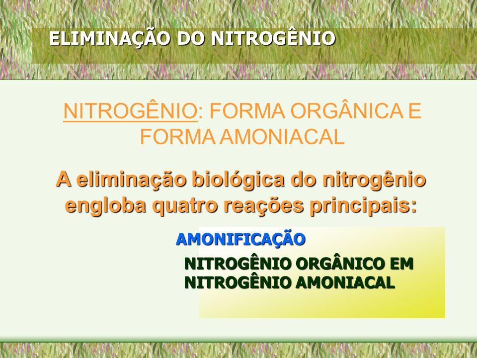 A eliminação biológica do nitrogênio engloba quatro reações principais: ELIMINAÇÃO DO NITROGÊNIO AMONIFICAÇÃO NITROGÊNIO ORGÂNICO EM NITROGÊNIO AMONIA