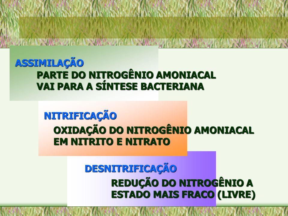 PARTE DO NITROGÊNIO AMONIACAL VAI PARA A SÍNTESE BACTERIANA OXIDAÇÃO DO NITROGÊNIO AMONIACAL EM NITRITO E NITRATO NITRIFICAÇÃO ASSIMILAÇÃO REDUÇÃO DO