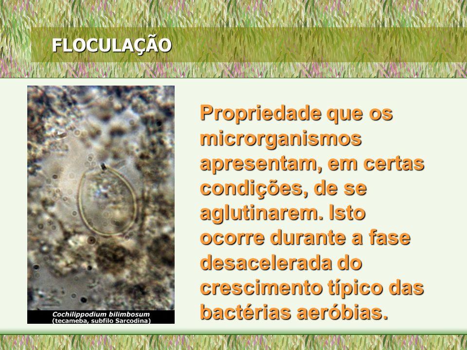 FLOCULAÇÃO Propriedade que os microrganismos apresentam, em certas condições, de se aglutinarem. Isto ocorre durante a fase desacelerada do cresciment
