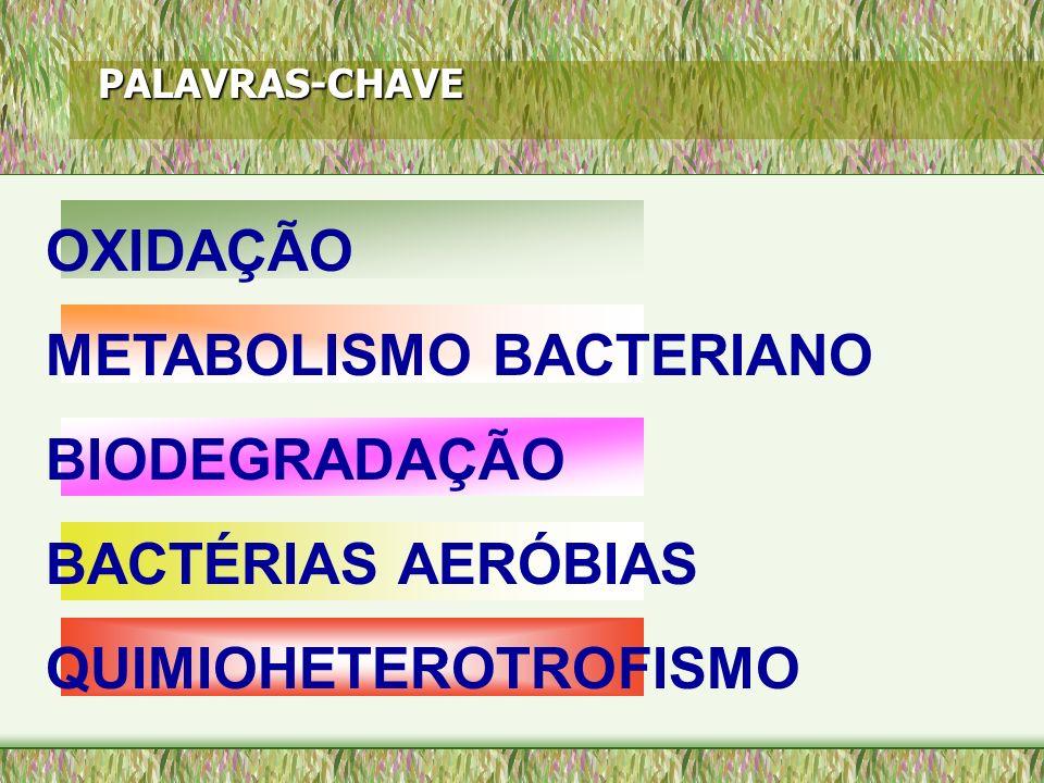 PALAVRAS-CHAVE OXIDAÇÃO METABOLISMO BACTERIANO BIODEGRADAÇÃO BACTÉRIAS AERÓBIAS QUIMIOHETEROTROFISMO