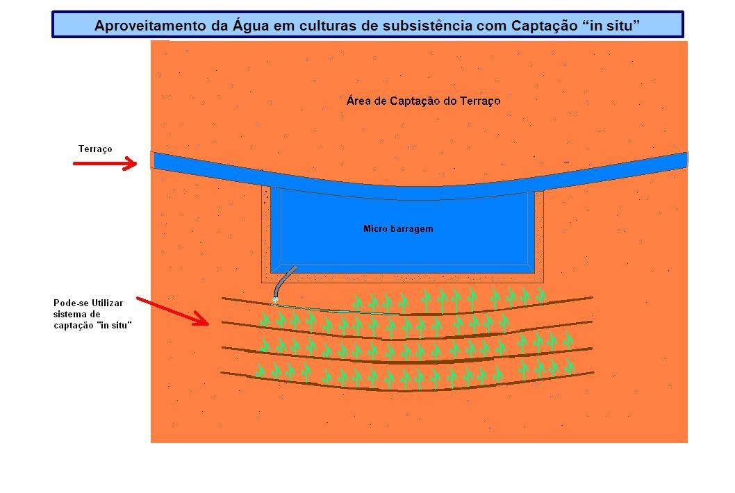 Aproveitamento da Água em culturas de subsistência com Captação in situ