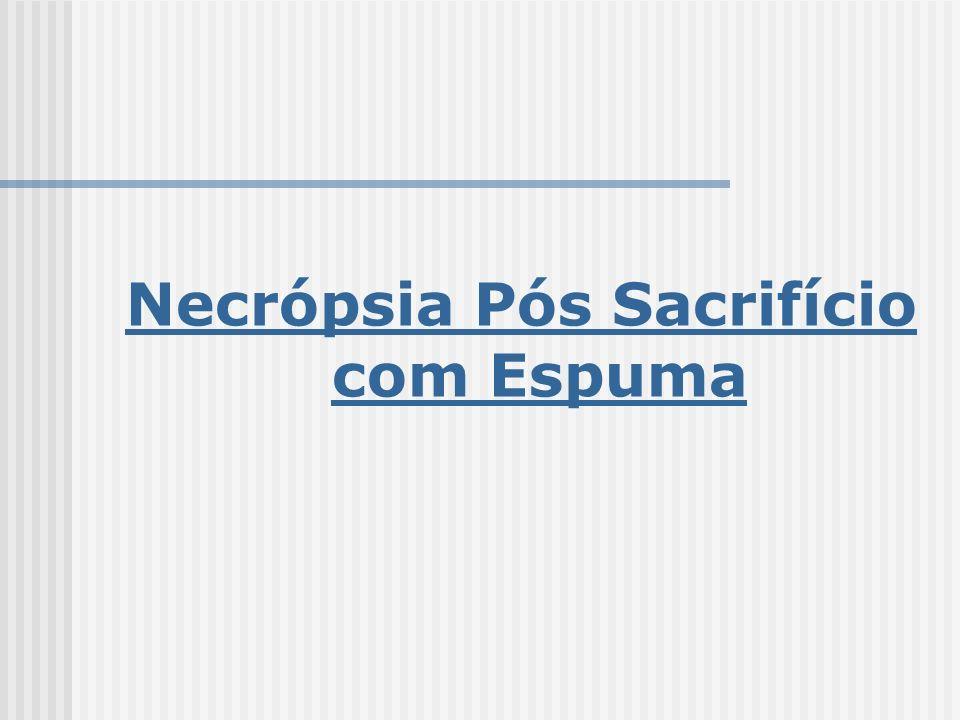 Necrópsia Pós Sacrifício com Espuma