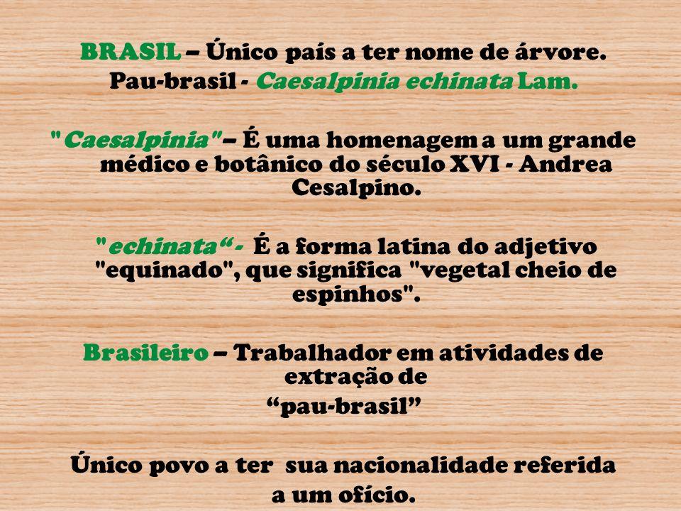 BRASIL – Único país a ter nome de árvore. Pau-brasil - Caesalpinia echinata Lam.