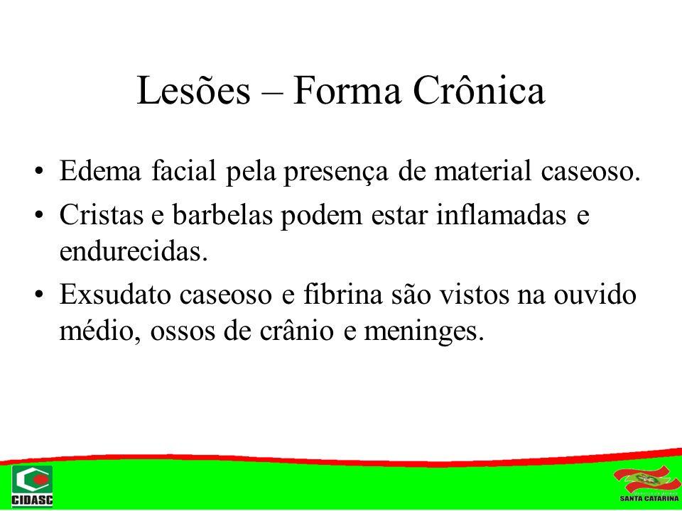 Lesões – Forma Crônica Edema facial pela presença de material caseoso. Cristas e barbelas podem estar inflamadas e endurecidas. Exsudato caseoso e fib