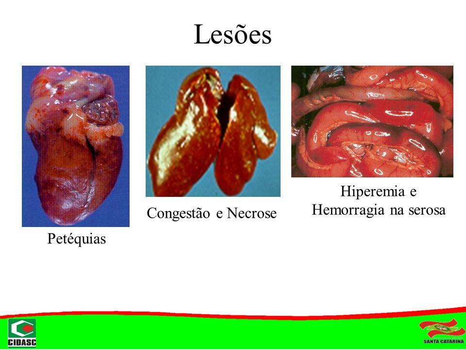 Lesões Petéquias Congestão e Necrose Hiperemia e Hemorragia na serosa