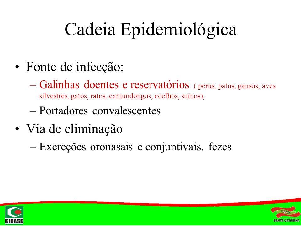 Cadeia Epidemiológica Fonte de infecção: –Galinhas doentes e reservatórios ( perus, patos, gansos, aves silvestres, gatos, ratos, camundongos, coelhos