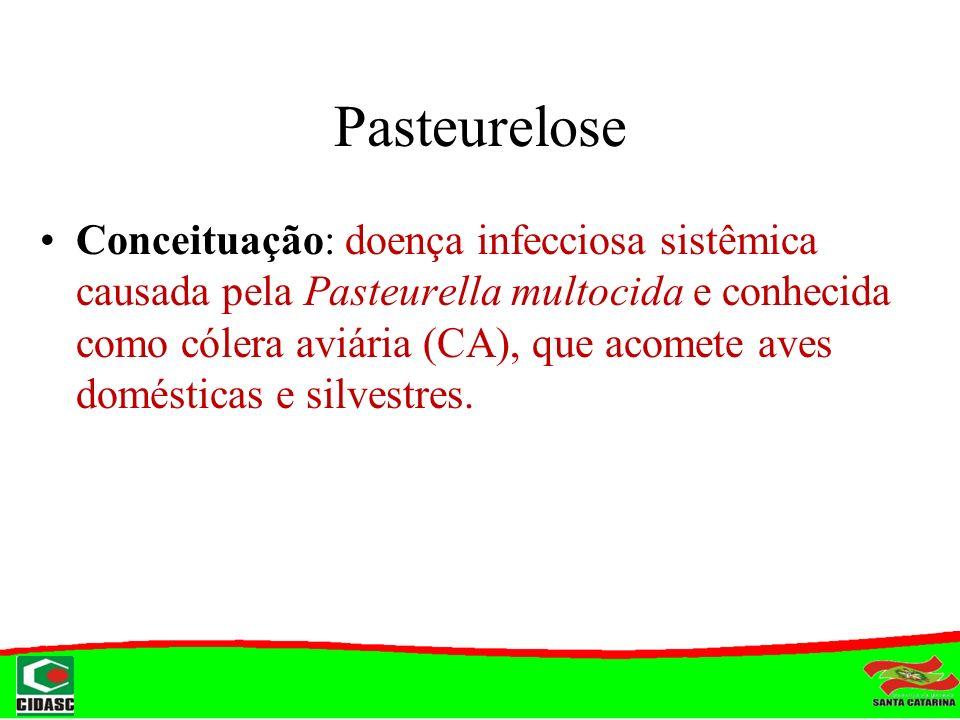 Pasteurelose Conceituação: doença infecciosa sistêmica causada pela Pasteurella multocida e conhecida como cólera aviária (CA), que acomete aves domés