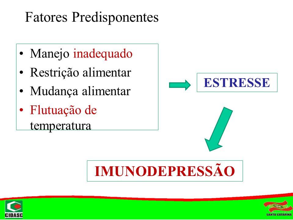 Fatores Predisponentes Manejo inadequado Restrição alimentar Mudança alimentar Flutuação de temperatura ESTRESSE IMUNODEPRESSÃO