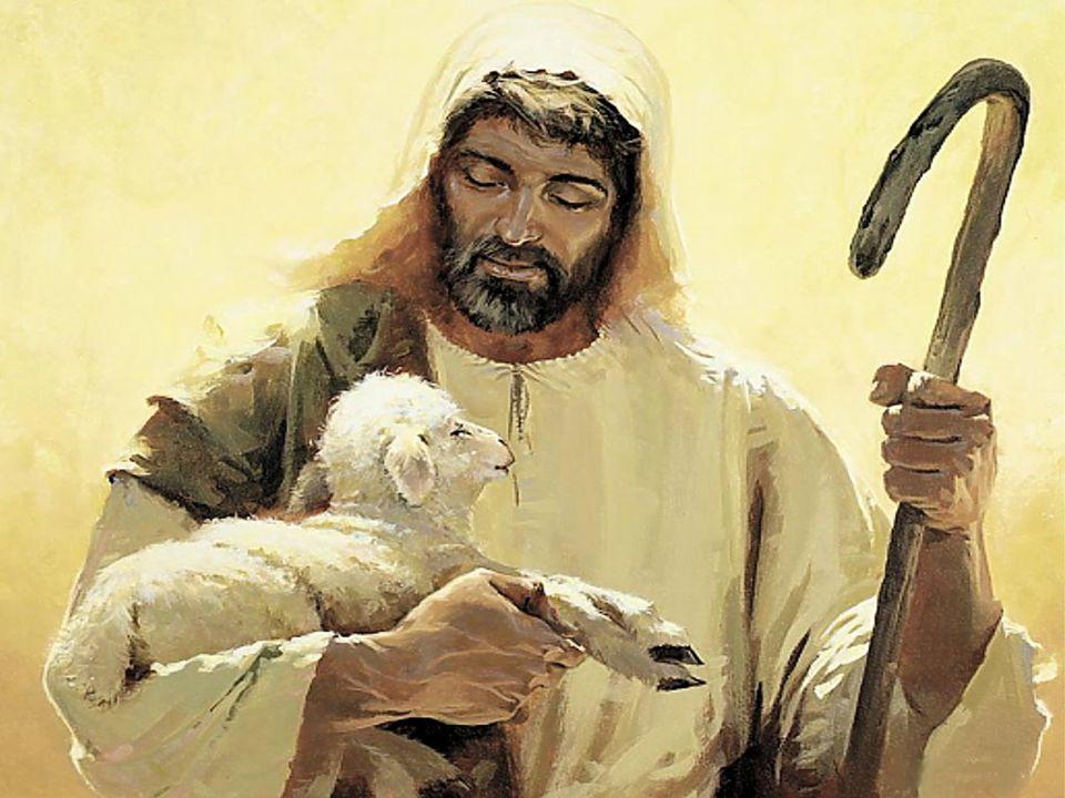- A Igreja deve oferecer a tantas pessoas cansadas e oprimidas, que parecem ovelhas sem pastor, um espaço de repouso e de paz, através da experiência