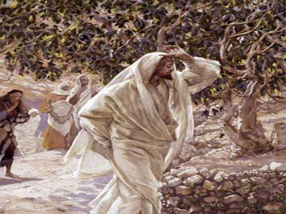 Esse Servo é JESUS, que pede uma nova chance para seu povo, sabendo que o Pai é bondoso e cheio de amor. * Conversão não é apenas uma penitência exter