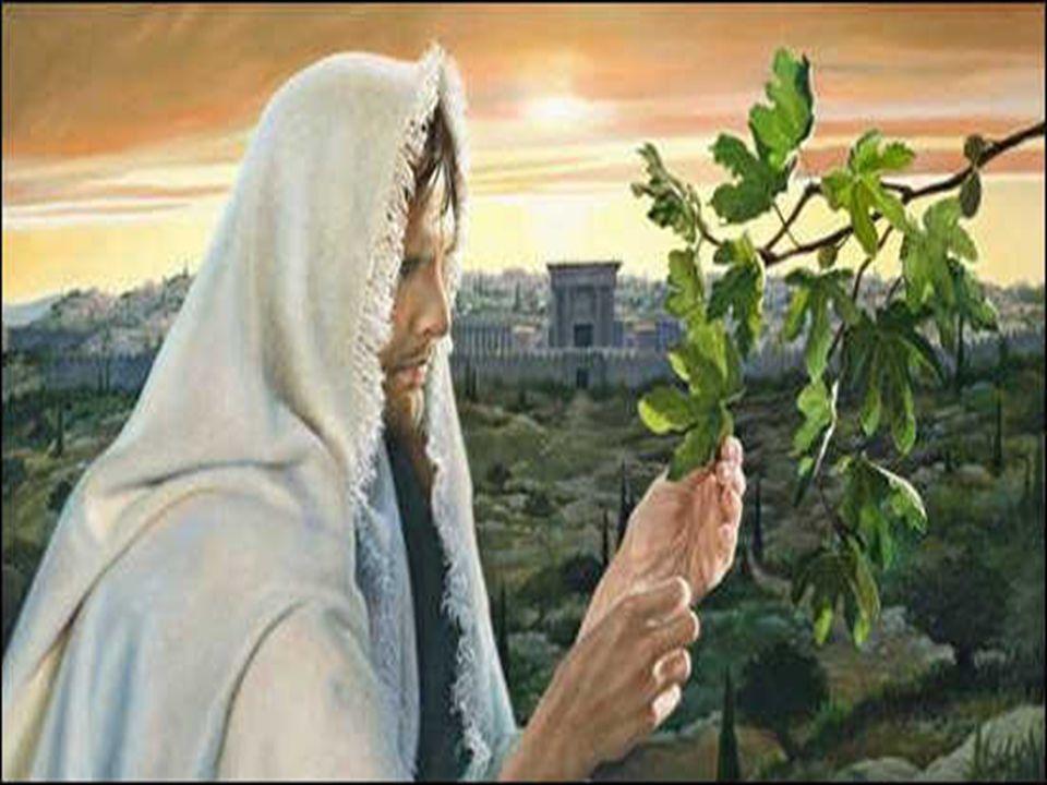 Rejeitar a ação salvadora de Deus, oferecida em Jesus é pior que um desastre. + E com a parábola da FIGUEIRA ESTÉRIL, Jesus ilustra a resistência de I