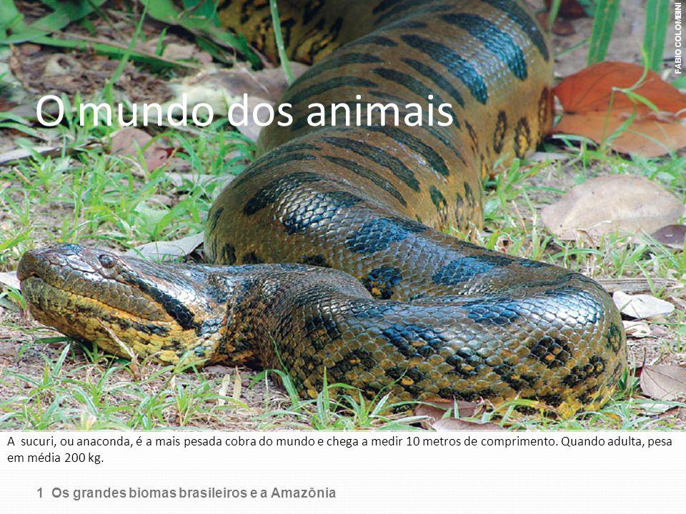O mundo dos animais A sucuri, ou anaconda, é a mais pesada cobra do mundo e chega a medir 10 metros de comprimento. Quando adulta, pesa em média 200 k