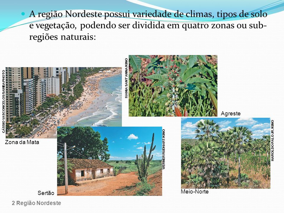 A região Nordeste possui variedade de climas, tipos de solo e vegetação, podendo ser dividida em quatro zonas ou sub- regiões naturais: Zona da Mata A