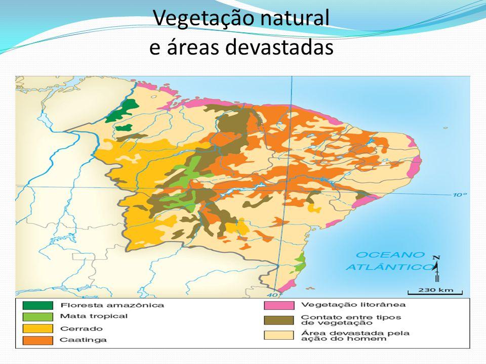 Vegetação natural e áreas devastadas