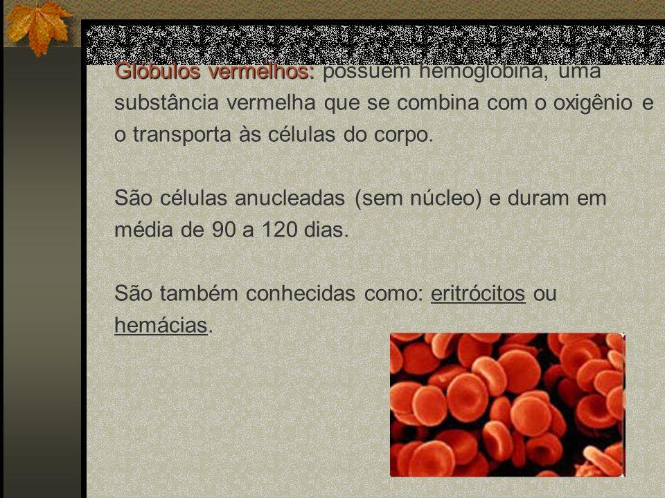 Glóbulos vermelhos: Glóbulos vermelhos: possuem hemoglobina, uma substância vermelha que se combina com o oxigênio e o transporta às células do corpo.