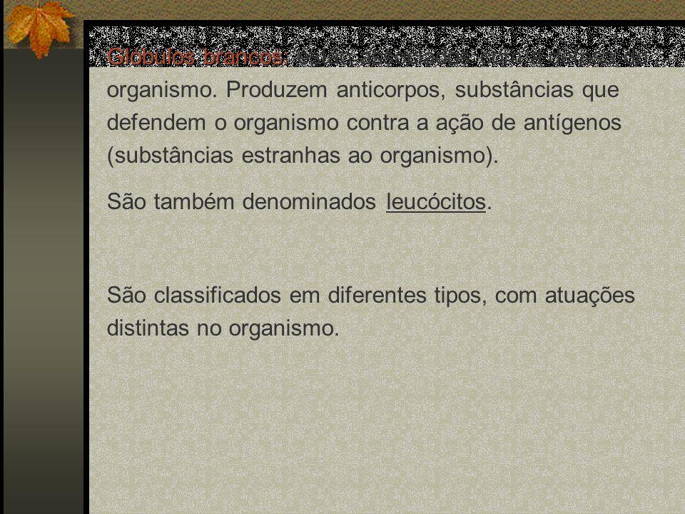 Glóbulos brancos: Glóbulos brancos: estão associados com a defesa do organismo. Produzem anticorpos, substâncias que defendem o organismo contra a açã