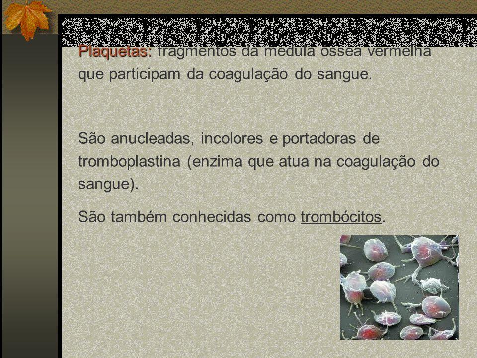 Plaquetas: Plaquetas: fragmentos da medula óssea vermelha que participam da coagulação do sangue. São anucleadas, incolores e portadoras de tromboplas