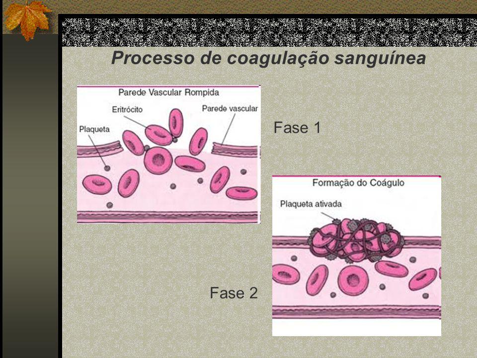 Processo de coagulação sanguínea Fase 1 Fase 2