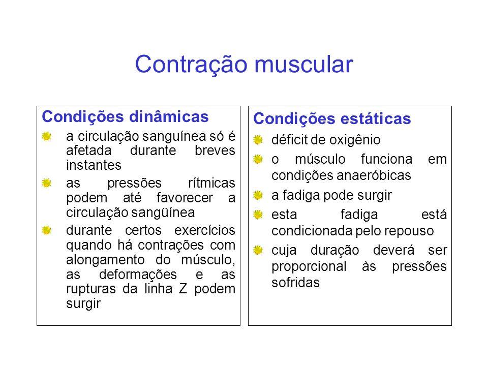 Contração muscular Condições dinâmicas a circulação sanguínea só é afetada durante breves instantes as pressões rítmicas podem até favorecer a circula