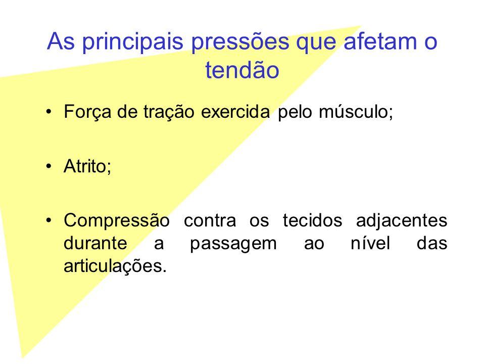 As principais pressões que afetam o tendão Força de tração exercida pelo músculo; Atrito; Compressão contra os tecidos adjacentes durante a passagem a