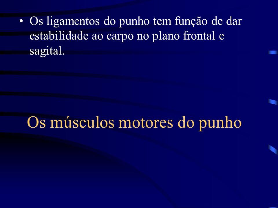 Os músculos motores do punho Os ligamentos do punho tem função de dar estabilidade ao carpo no plano frontal e sagital.