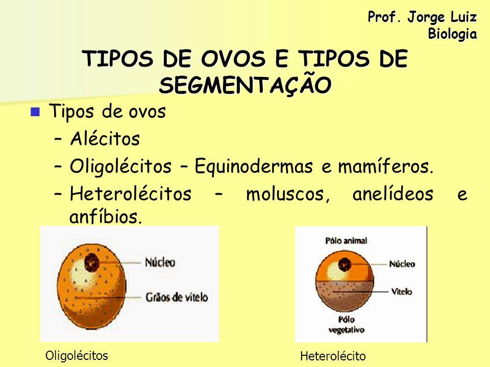 TIPOS DE OVOS E TIPOS DE SEGMENTAÇÃO Tipos de ovos – –Alécitos – –Oligolécitos – Equinodermas e mamíferos. – –Heterolécitos – moluscos, anelídeos e an