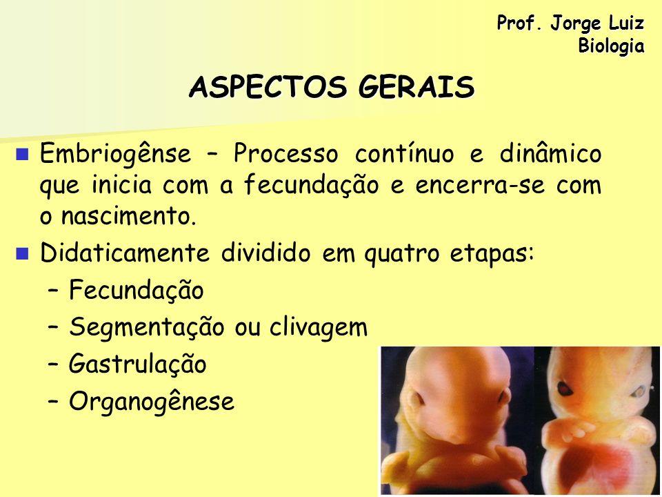 ASPECTOS GERAIS Embriogênse – Processo contínuo e dinâmico que inicia com a fecundação e encerra-se com o nascimento. Didaticamente dividido em quatro