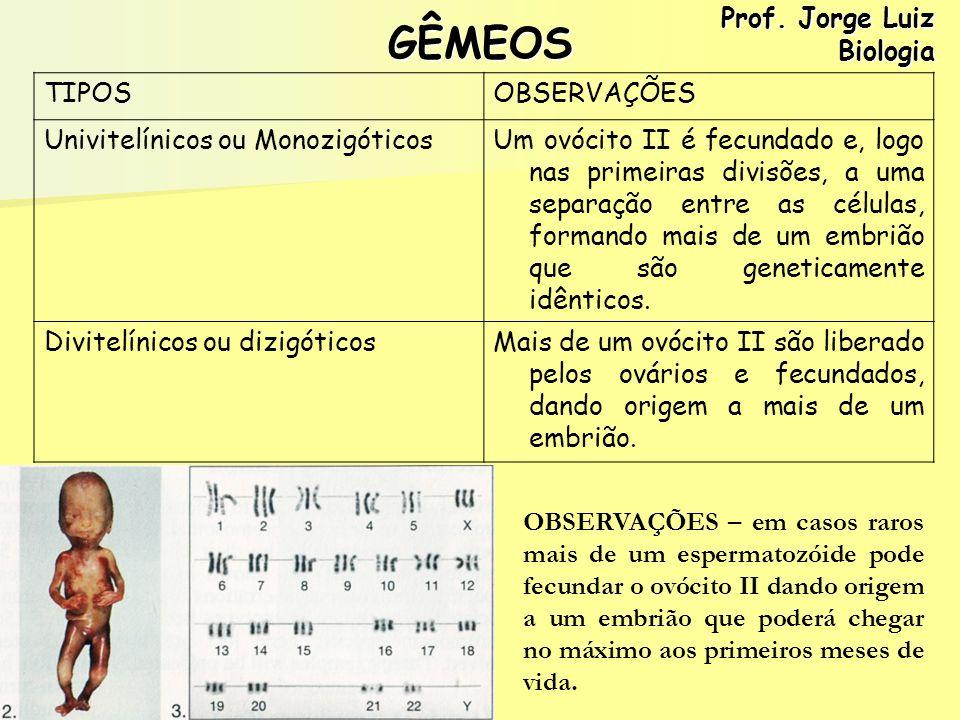 GÊMEOS TIPOSOBSERVAÇÕES Univitelínicos ou MonozigóticosUm ovócito II é fecundado e, logo nas primeiras divisões, a uma separação entre as células, for