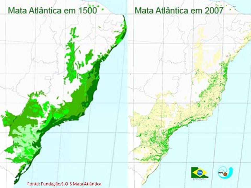 Fonte: Fundação S.O.S Mata Atlântica