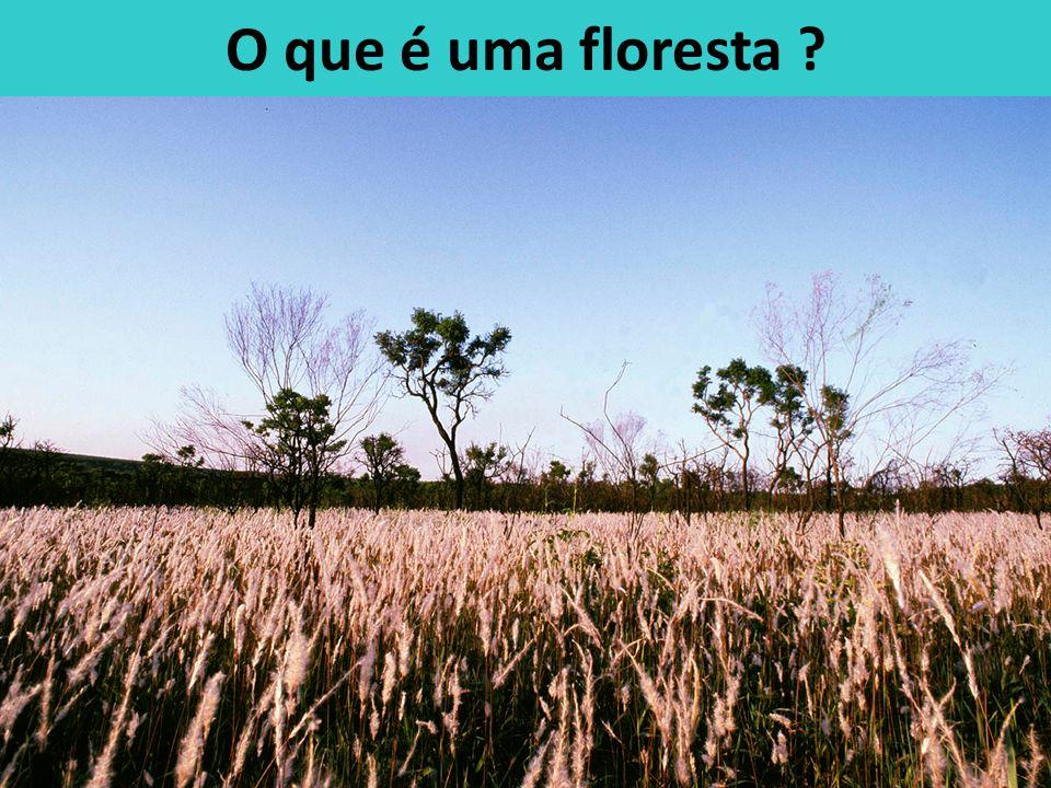 O que é uma floresta ?