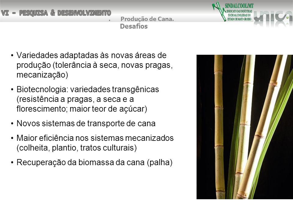 Variedades adaptadas às novas áreas de produção (tolerância à seca, novas pragas, mecanização) Biotecnologia: variedades transgênicas (resistência a p