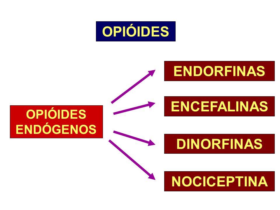 OPIÓIDES OPIÓIDES ENDÓGENOS ENDORFINAS ENCEFALINAS DINORFINAS NOCICEPTINA