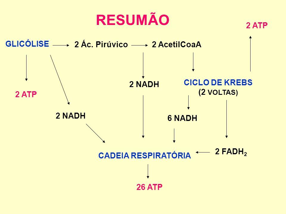 Etapas do metabolismo aeróbio da glicose com produção de ATP