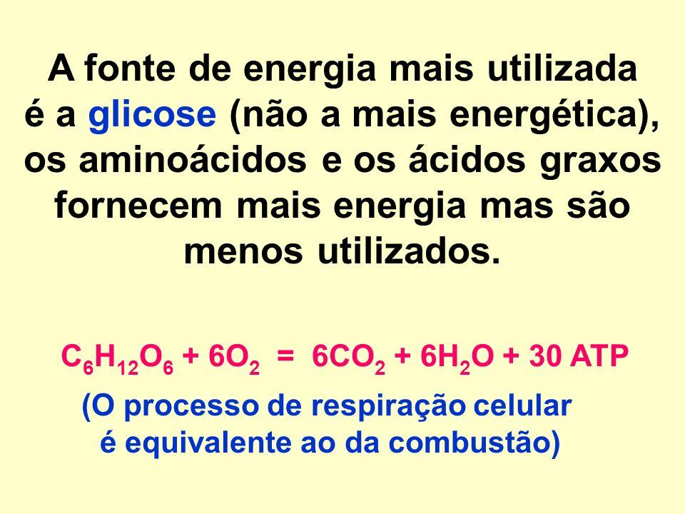 A fonte de energia mais utilizada é a glicose (não a mais energética), os aminoácidos e os ácidos graxos fornecem mais energia mas são menos utilizados.