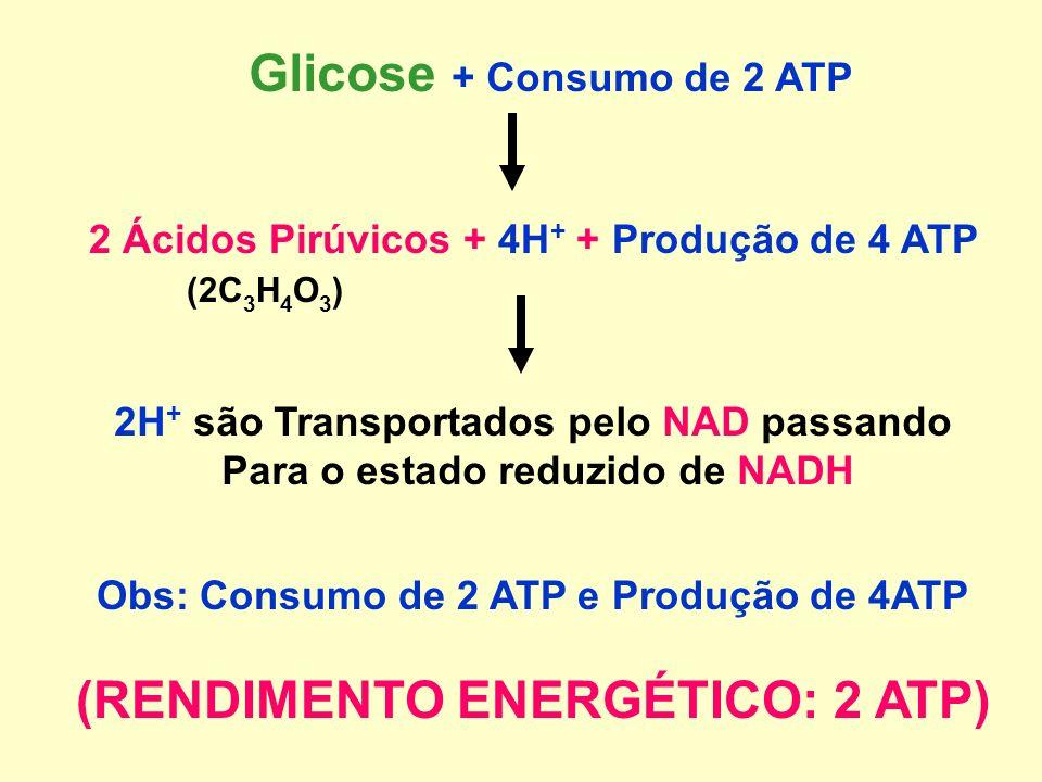Glicose + Consumo de 2 ATP 2 Ácidos Pirúvicos + 4H + + Produção de 4 ATP (2C 3 H 4 O 3 ) 2H + são Transportados pelo NAD passando Para o estado reduzido de NADH Obs: Consumo de 2 ATP e Produção de 4ATP (RENDIMENTO ENERGÉTICO: 2 ATP)