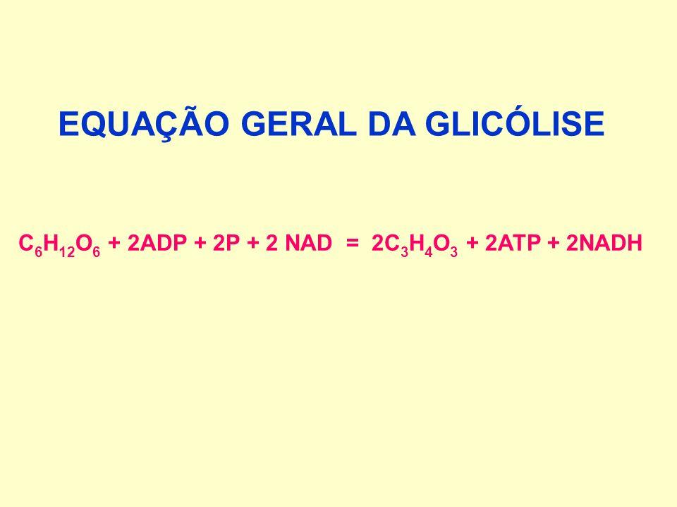C 6 H 12 O 6 + 2ADP + 2P + 2 NAD = 2C 3 H 4 O 3 + 2ATP + 2NADH EQUAÇÃO GERAL DA GLICÓLISE