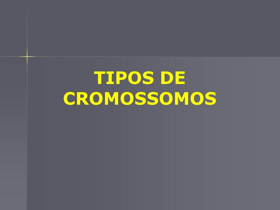 CROMÁTIDES-IRMÃS APÓS A DUPLICAÇÃO, CADA CROMOSSOMO É CONSTITUÍDO POR DOIS BRAÇOS DENOMINADOS CROMÁTIDES-IRMÃS
