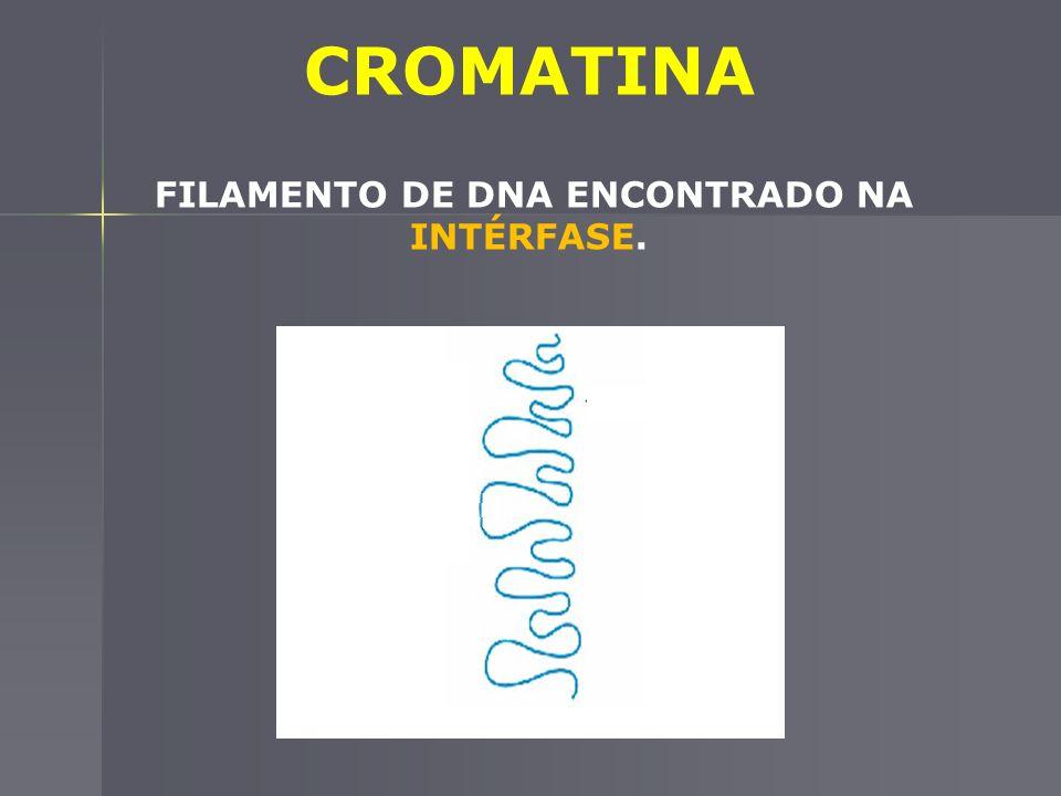 CROMATINA FILAMENTO DE DNA ENCONTRADO NA INTÉRFASE.