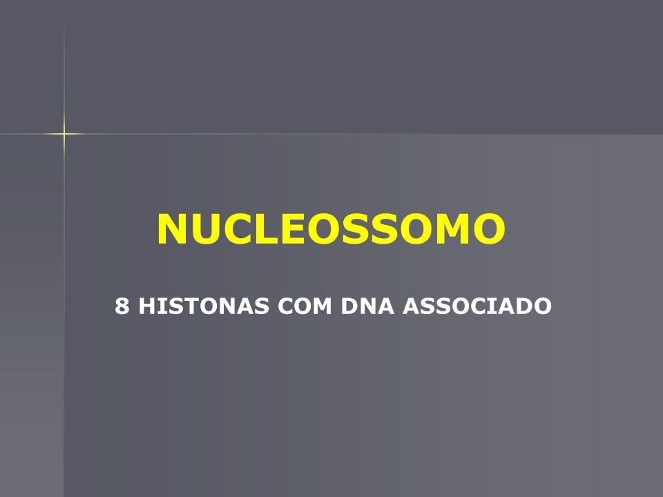 ORGANIZAÇÃO MOLECULAR DOS CROMOSSOMOS