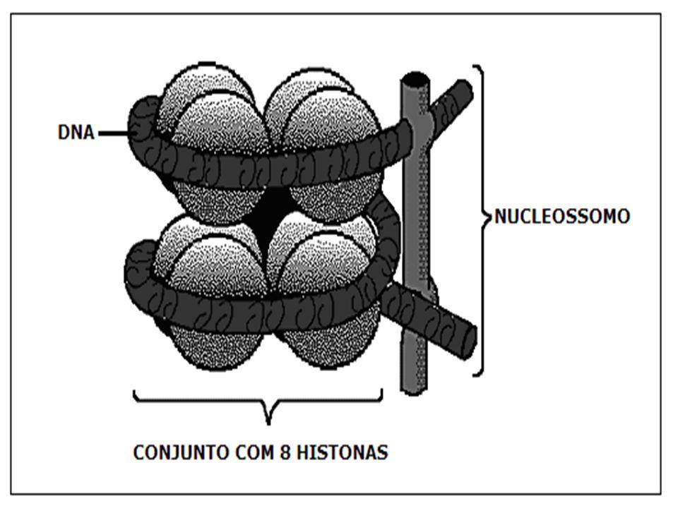 NUCLEOSSOMO 8 HISTONAS COM DNA ASSOCIADO