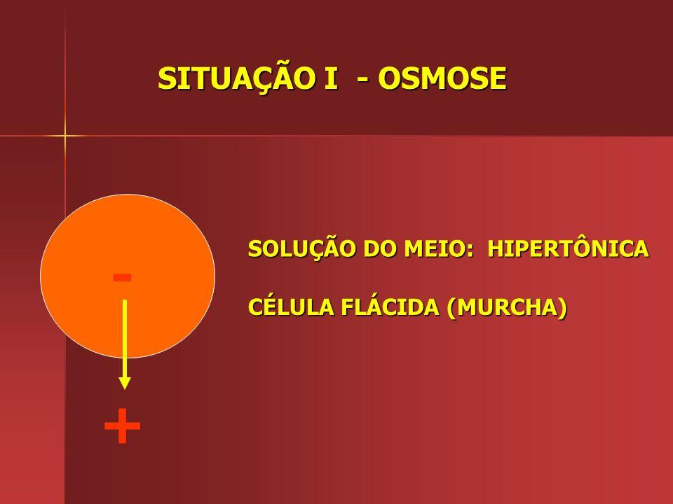 ESQUEMA DA SETINHA -(SOLUTO) +(SOLUTO) SOLVENTE