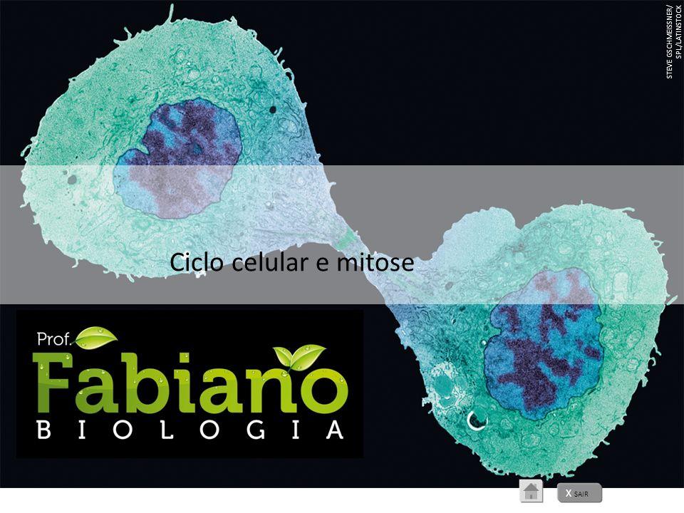X SAIR STEVE GSCHMEISSNER/ SPL/LATINSTOCK Ciclo celular e mitose
