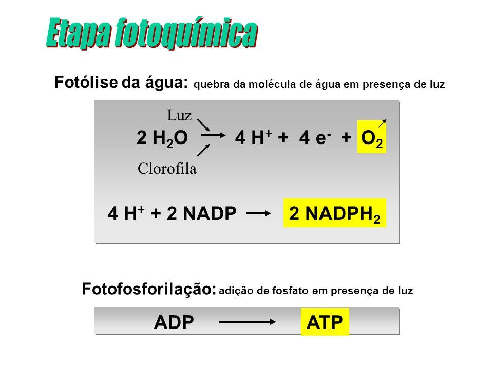 Fotólise da água: quebra da molécula de água em presença de luz Luz Clorofila Fotofosforilação: adição de fosfato em presença de luz ATP ADP O2O2 2 NA