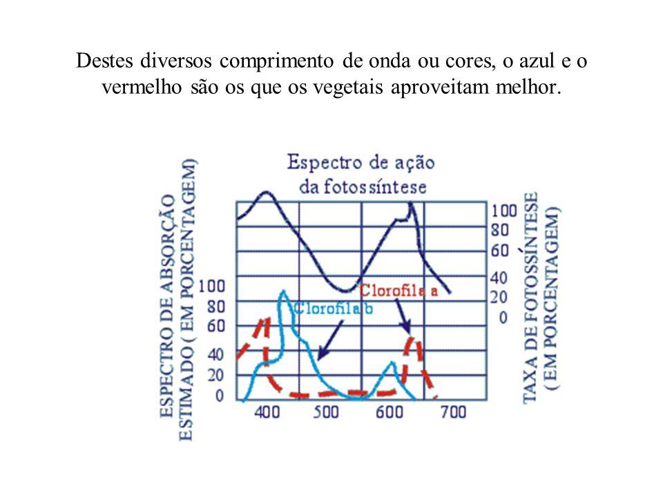 Destes diversos comprimento de onda ou cores, o azul e o vermelho são os que os vegetais aproveitam melhor.